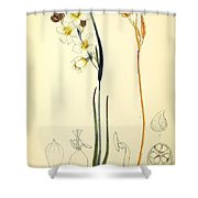 Illustrations Of The Flowering Plants And Ferns Of The Falkland Islands Shower Curtain