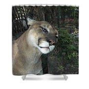 1153 - Mountain Lion Shower Curtain