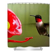 1164 - Hummingbird Shower Curtain