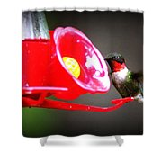 1175 - Hummingbird Shower Curtain