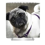 Dog Shower Curtain