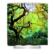 12 Abstract Japanese Maple Tree Shower Curtain