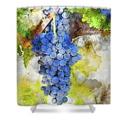 Red Grapes On The Vine Shower Curtain