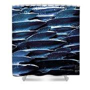 Shark Skin, Sem Shower Curtain