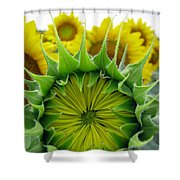 Sunflower Series Shower Curtain