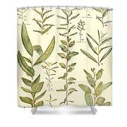 Vintage Botanical Illustration Shower Curtain