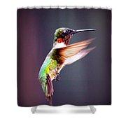1257-006 - Ruby-throated Hummingbird Shower Curtain