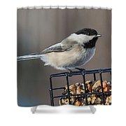 Black Capped Chickadee Shower Curtain