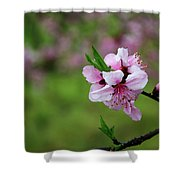 Blossoming Peach Flowers  Closeup Shower Curtain