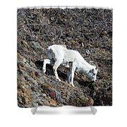 Dahl Sheep, Turnigan Arm Shower Curtain
