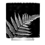 Fern Close-up  Shower Curtain