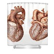 Heart, Anatomical Illustration, 1814 Shower Curtain