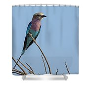 Lilac Breasted Roller On Alert Shower Curtain