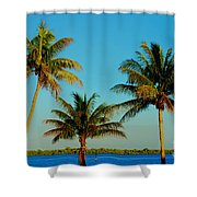 13- Palms In Paradise Shower Curtain