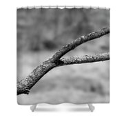 Bare Tree Branches In Early Spring Shower Curtain