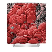 Human Red Blood Cells, Sem Shower Curtain