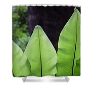 Rainforest At Foxground, Kiama Shower Curtain