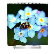 14 Spot Ladybird Shower Curtain