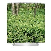 146112 Ferns In Pisgah Nat Forest V Shower Curtain