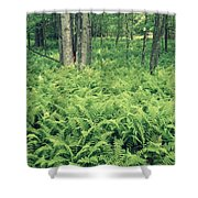 146113 Frens In Pisgah Nat Forest H Shower Curtain