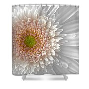 1475-004 Shower Curtain