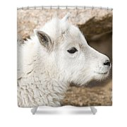 Baby Mountain Goats On Mount Evans Shower Curtain