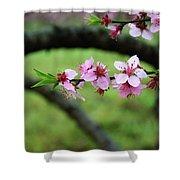 Blossoming Peach Flowers  Closeup Shower Curtain
