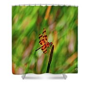 15- Dragonfly Shower Curtain