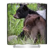 15 Shower Curtain