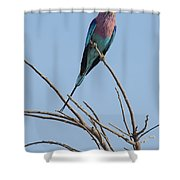 Lilac Breasted Roller 2 Shower Curtain