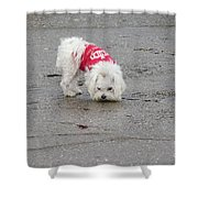 My Small Dog Shower Curtain