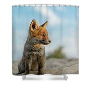 Red Fox Cub Shower Curtain