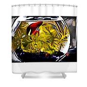 Siamese Fighting Fish Shower Curtain