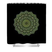 15 Symmetry Celery Bulb Shower Curtain