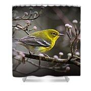 1574 - Pine Warbler Shower Curtain