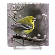 1575 - Pine Warbler Shower Curtain