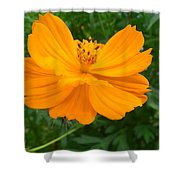 Australia - Yellow Flowers Of The Cosmos Carpet Shower Curtain