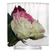 Beautiful Roses Shower Curtain