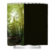 Forest Trail 2 Shower Curtain