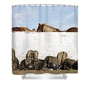162669 Horse Walls Animals National Geographic Shower Curtain