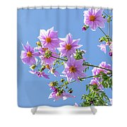Fully Bloomed Pink Dahlia Imperialis At Garden In November Shower Curtain