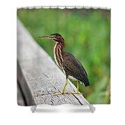 81- Green Heron Shower Curtain