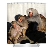 Hellabrunn Zoo - Munich, Germany Shower Curtain