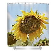 Nice Sunflower Shower Curtain