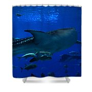 1701 Shower Curtain