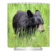American Black Bear Yellowstone Usa Shower Curtain