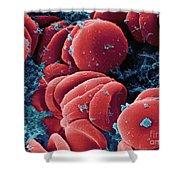Human Red Blood Cells, Sem Shower Curtain