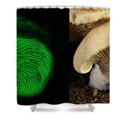 Luminescent Mushroom, Panellus Stipticus Shower Curtain