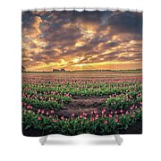 180 Degree View Of Sunrise Over Tulip Field Shower Curtain