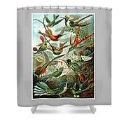 1899 Hummingbird Species Art Forms Of Nature Print Shower Curtain